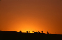 Evening silhoutte of camels riders.