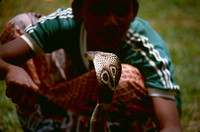 Young boy with live Cobra.