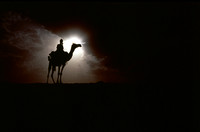 Camel silhouetted in dust storm.