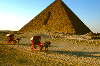 Horse carts in front of the Pyramids.